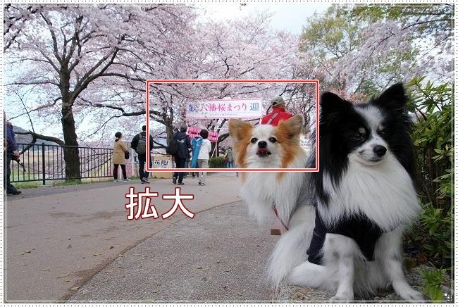 2IMG_2649.jpg