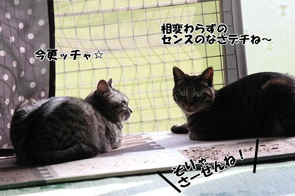 IMG_0519 (2)