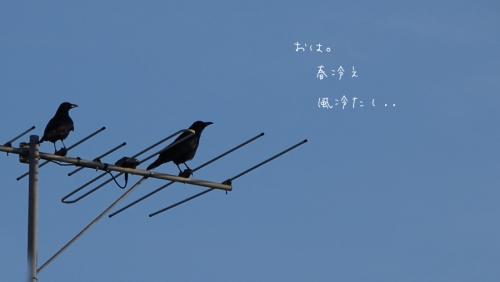 16316-a1.jpg
