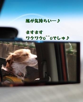 IMG_8096 (361x444)