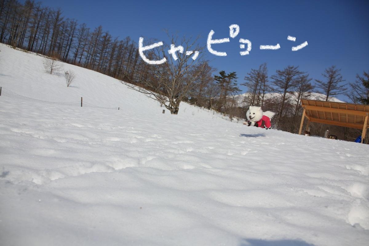 2K5A4647.jpg