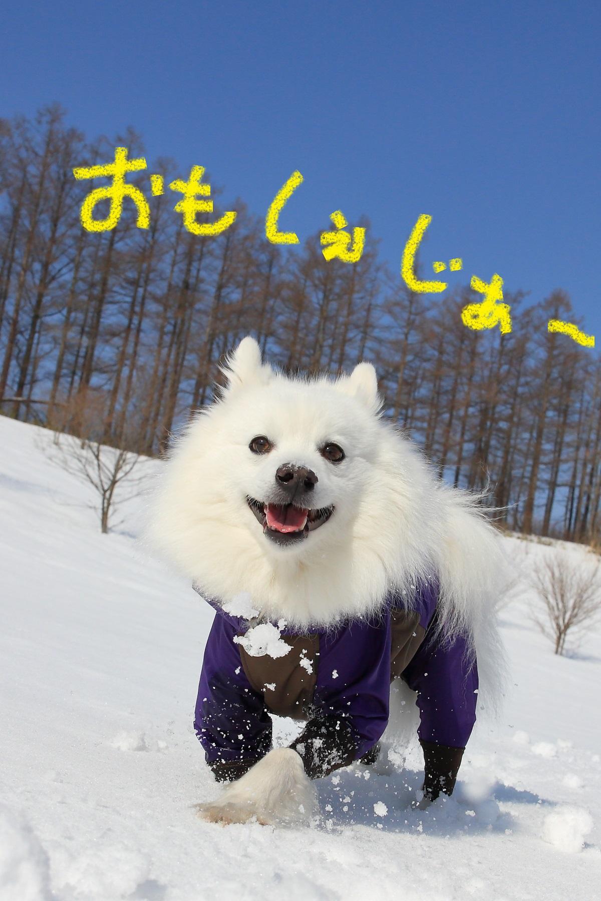 2K5A5101.jpg