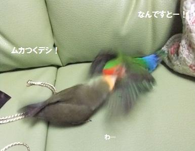 2012746.jpg