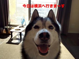IMG_20160211_092937_Fotor.jpg