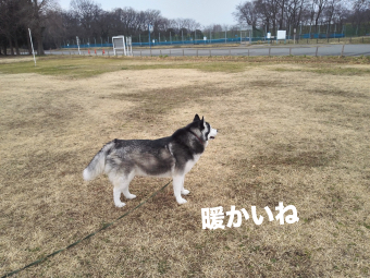 IMG_20160305_072618_Fotor.jpg