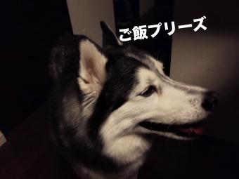 IMG_20160329_203601_Fotor.jpg