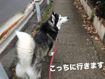 IMG_2615_Fotor.jpg