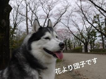 P1030248_Fotor.jpg