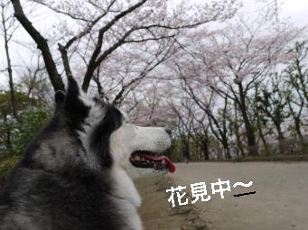 P1030251_Fotor.jpg