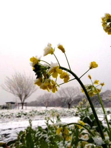 雪アジ 0225/2015