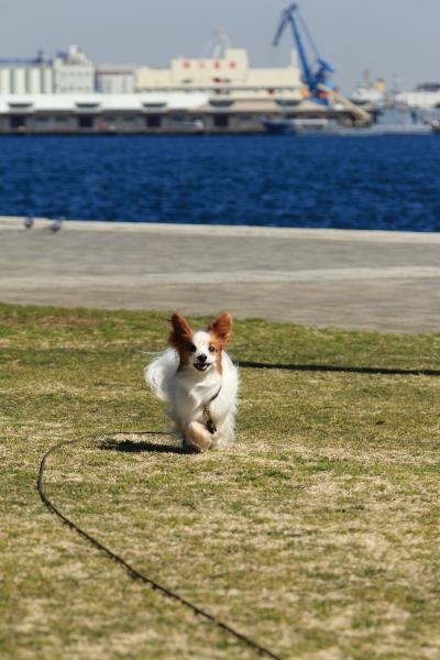 3月の犬@写真部 2016