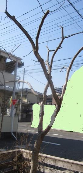WEB_庭木剪定5