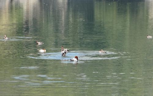 1603水鳥-convert