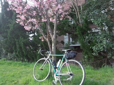 桜コルナゴ