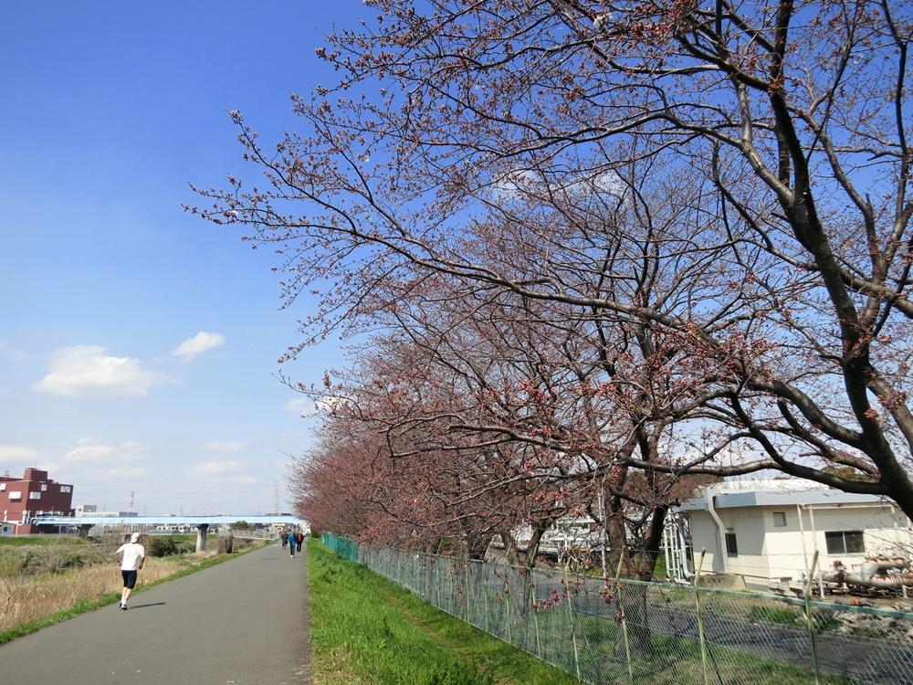 160329鶴見川-03