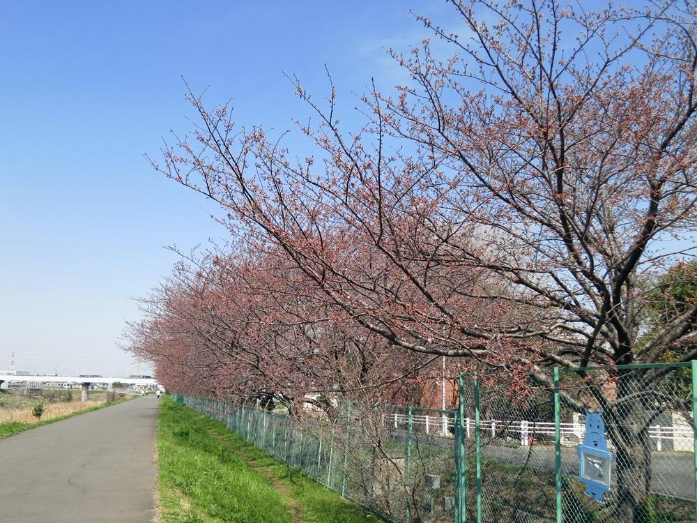 160329鶴見川-07