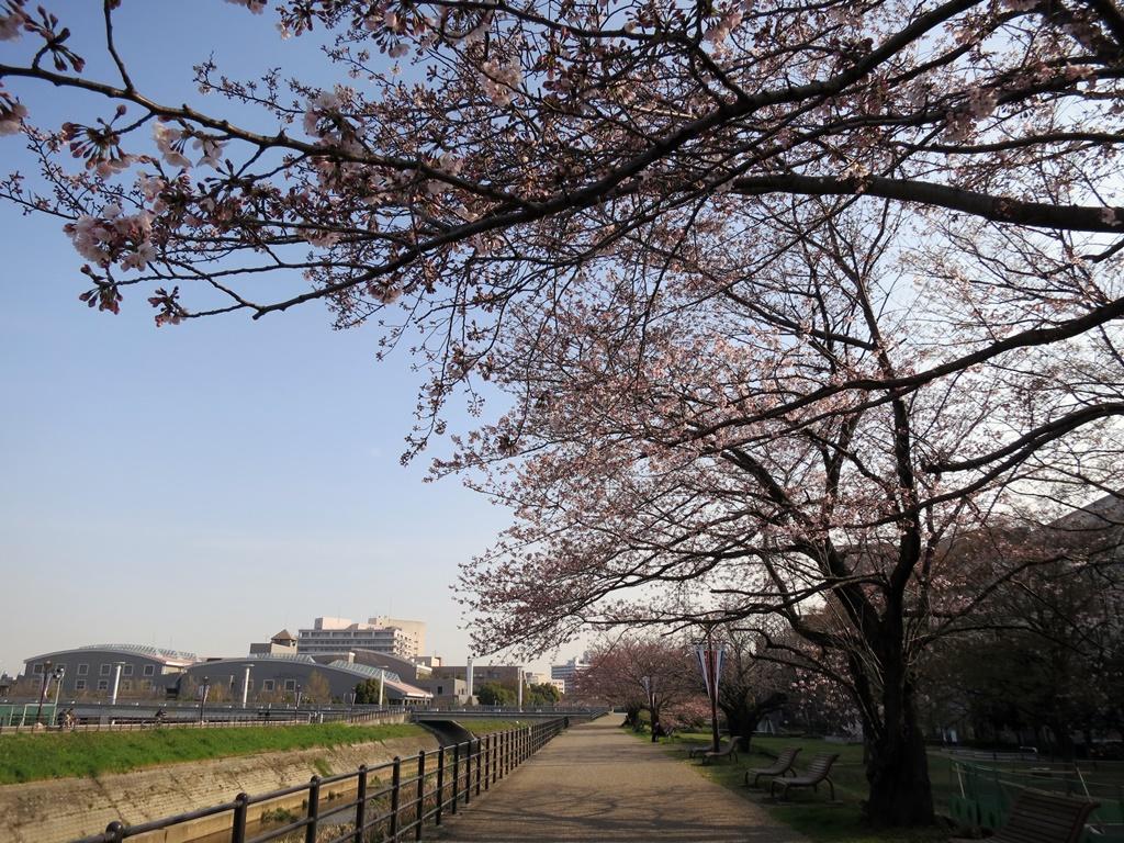 160331野川-01