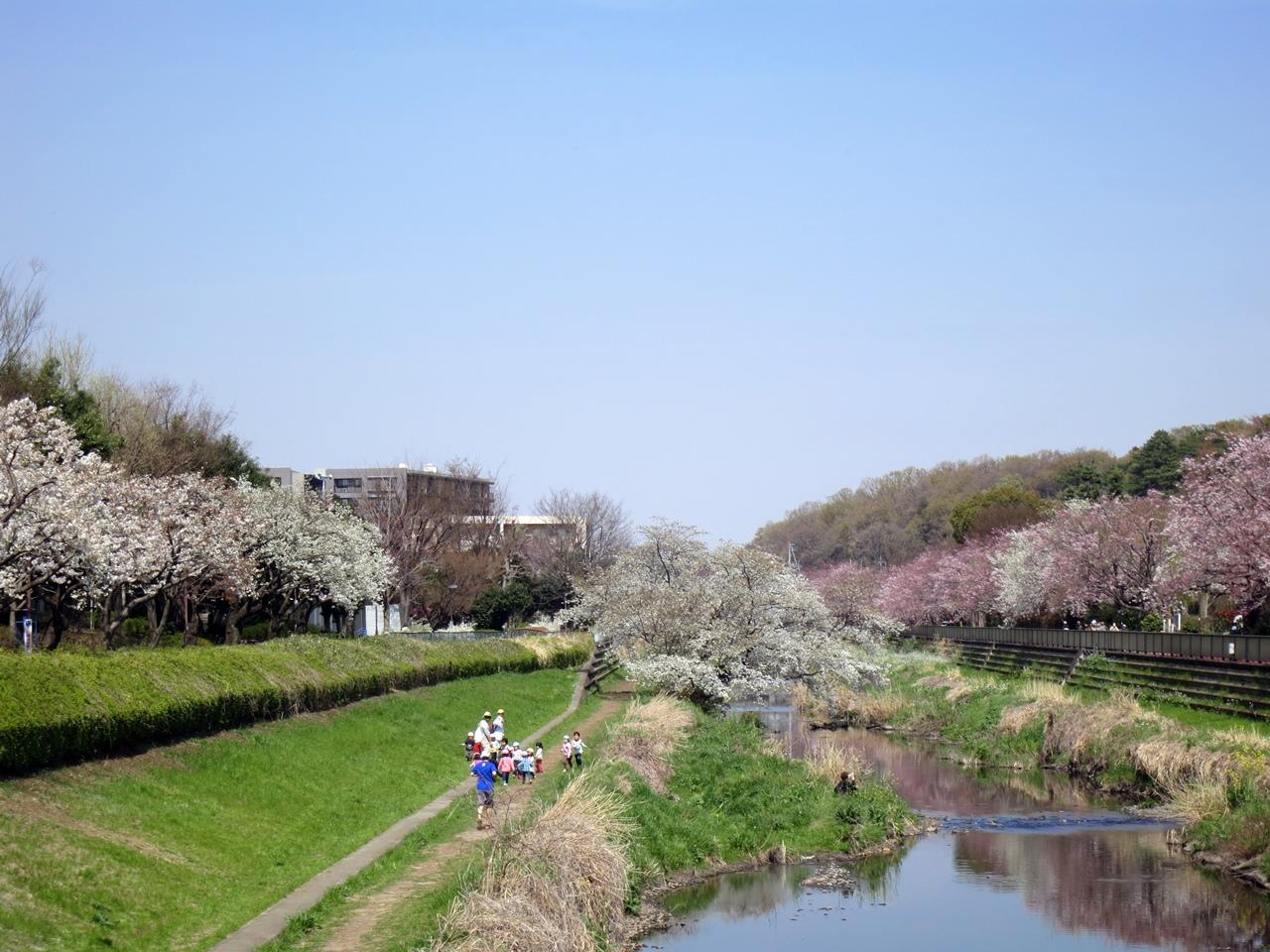 160331野川-10