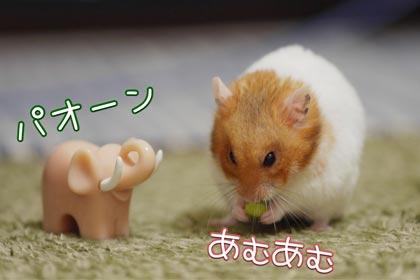 ヒヨドリ2