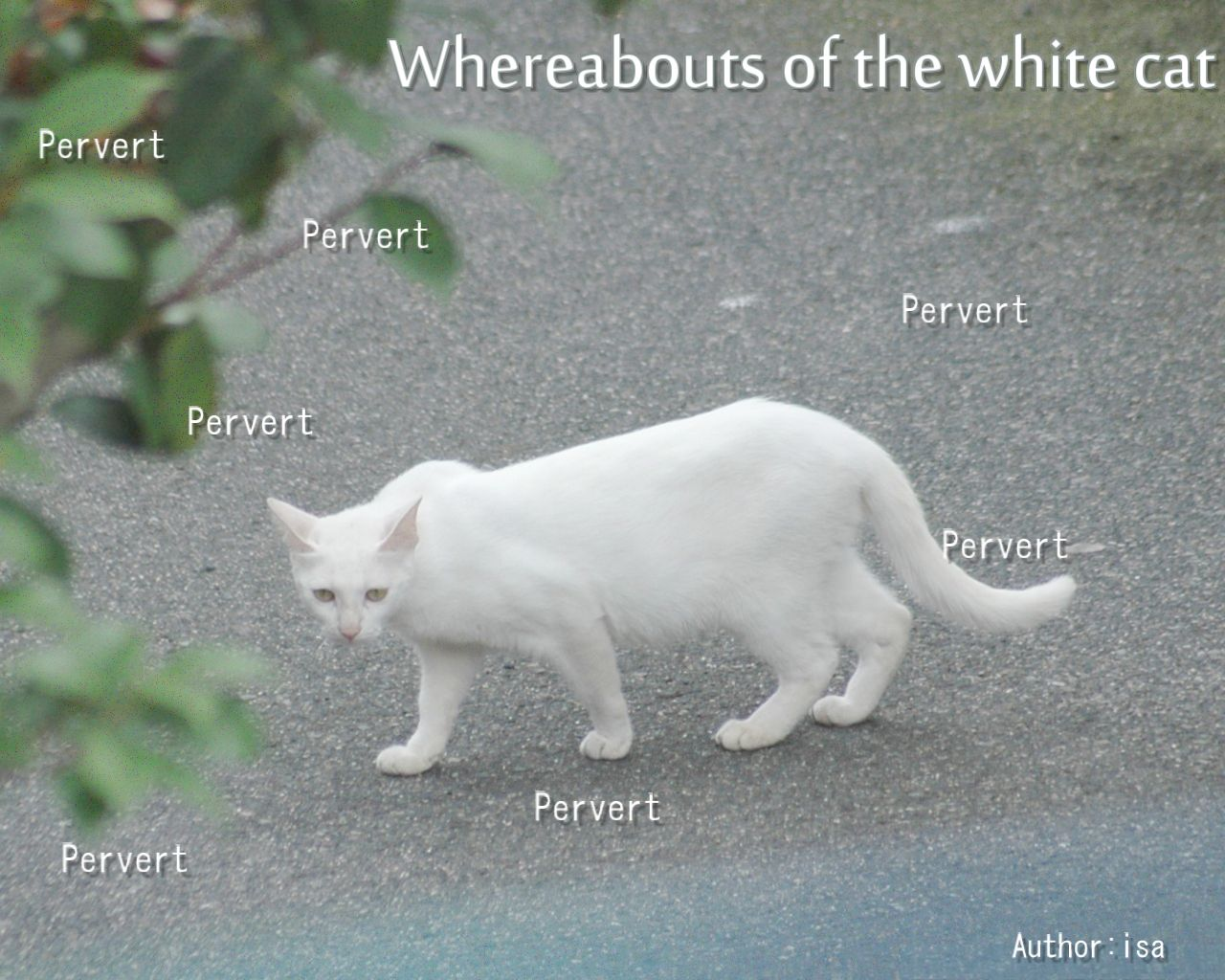 白猫の行方イメージ