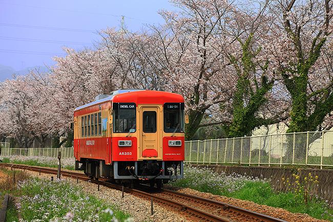 甘木鉄道の春