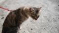 豊川招き猫2 (1)