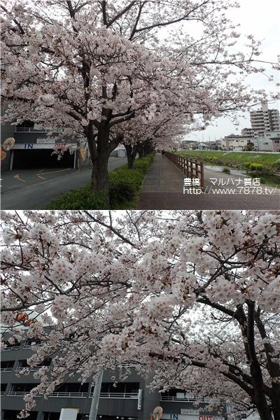 柳生川20160403