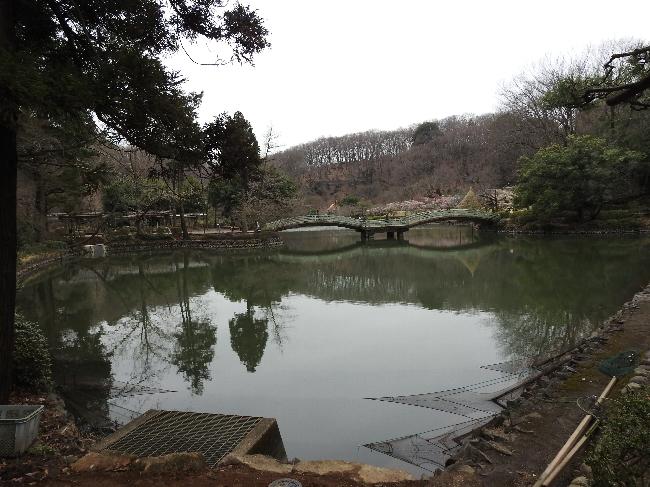 160313c 薬師池