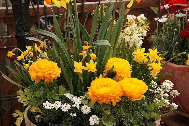 春 寄せ植え2