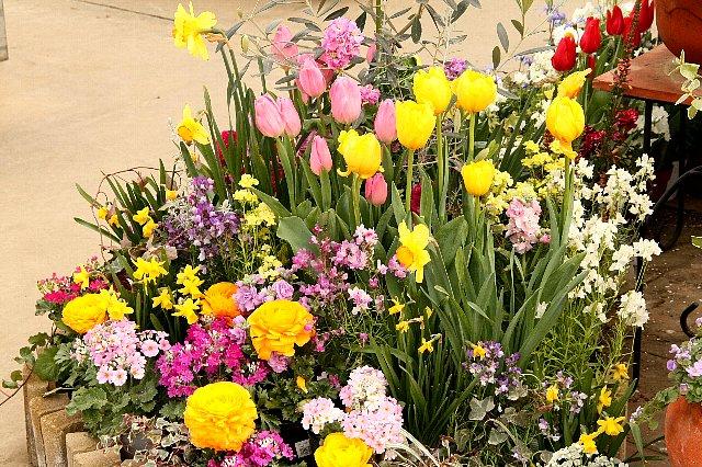 春 寄せ植え