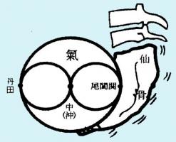 仙骨・丹田