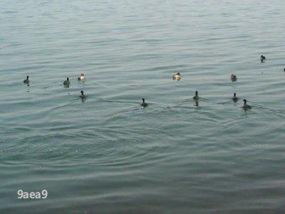 3-4 滋賀県大津 琵琶湖4
