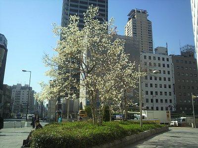 3-17 長堀橋から難波神社へ1