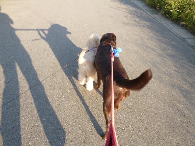 初散歩 030
