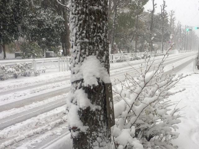 2016年1月18日東京大雪1 by占いとか魔術とか所蔵画像