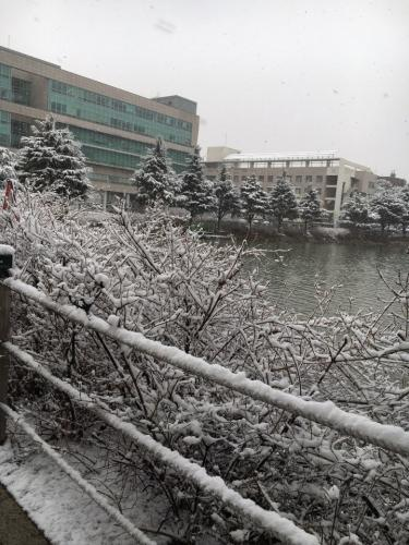 突然の吹雪で雪景色に・・。