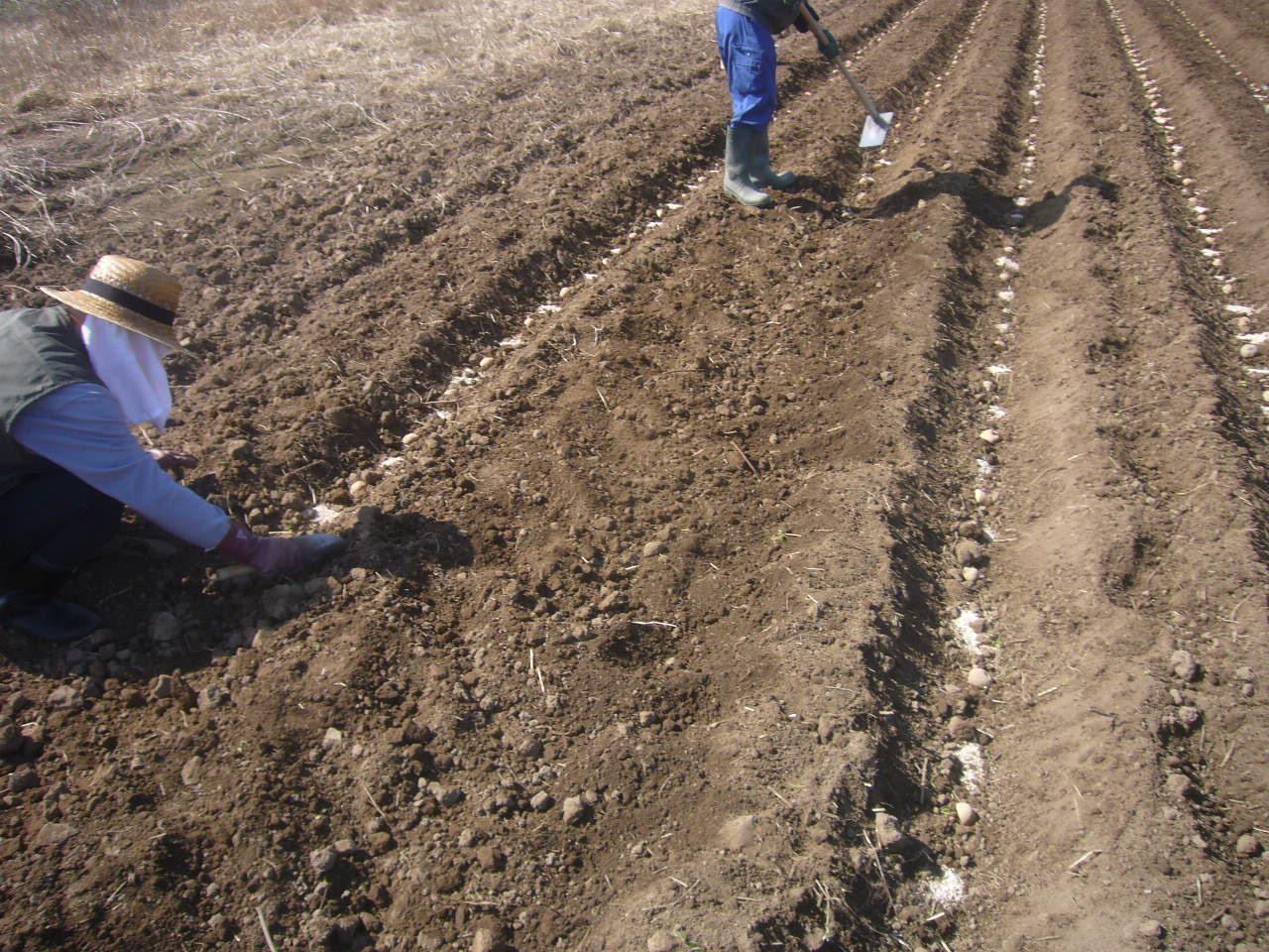 農作業 H28.4.02