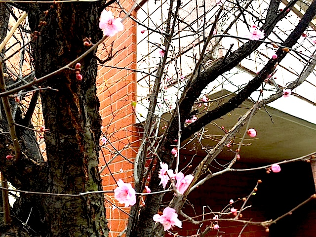 spring flower2016