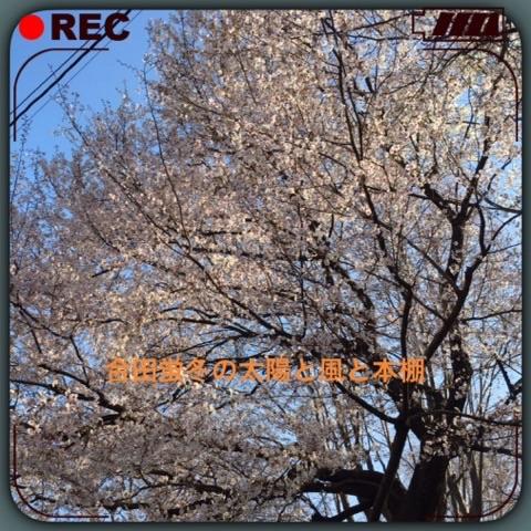 2016上板橋桜