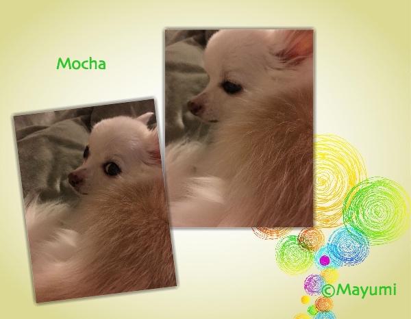 Collage_Fotor_mocha_01_Fotor.jpg