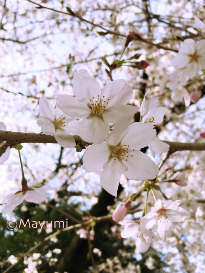 IMG_1268_Fotor.jpg