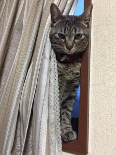 おにゃんてぃ 0313−2