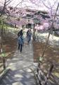 小松ヶ池へ下りる石段