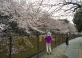櫻を背景に撮影