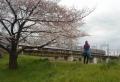 東武東上線と桜①
