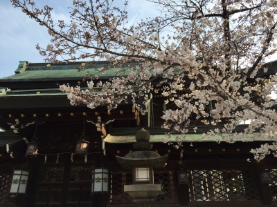 天満宮さん桜1天満宮さん桜