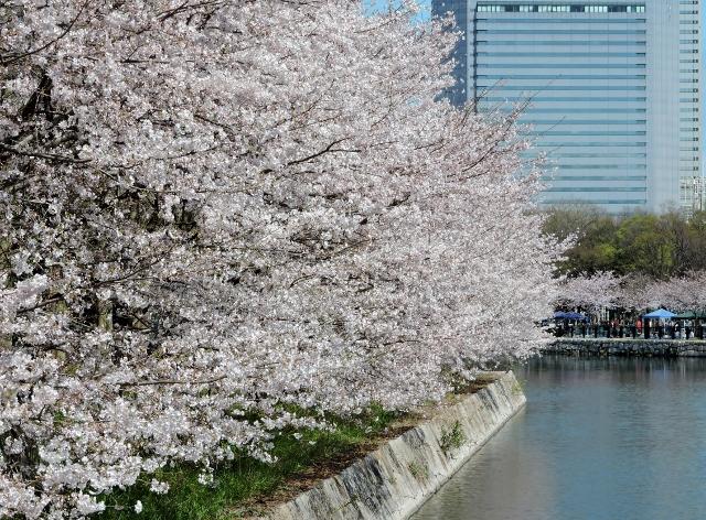 桜2016-04-02 003 (640x472)