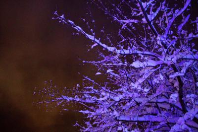 冬の木(ブルーの光・かぜっぷさん)
