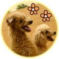 千葉ニュータウンの保護犬猫カフェ3s