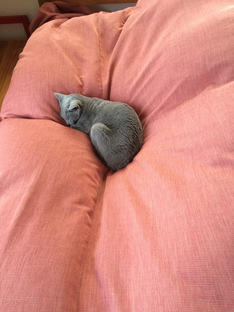 エマ広いベッドで